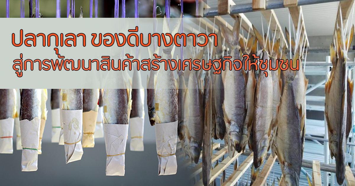 ปลากุเลา ของดีบางตาวา สู่การพัฒนาสินค้าสร้างเศรษฐกิจให้ชุมชน