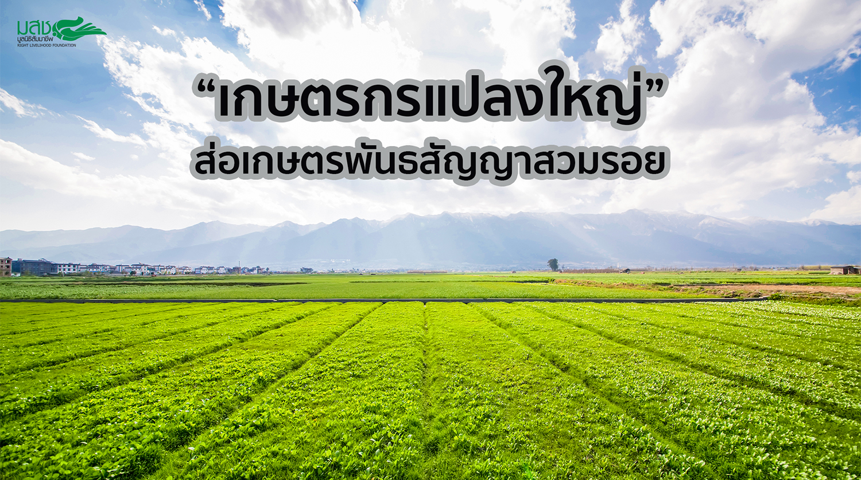 เกษตรกรแปลงใหญ่ส่อเกษตรพันธสัญญาสวมรอย