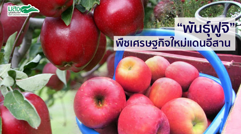 """""""แอปเปิ้ลพันธุ์ฟูจิ"""" พืชเศรษฐกิจใหม่แดนอีสาน"""